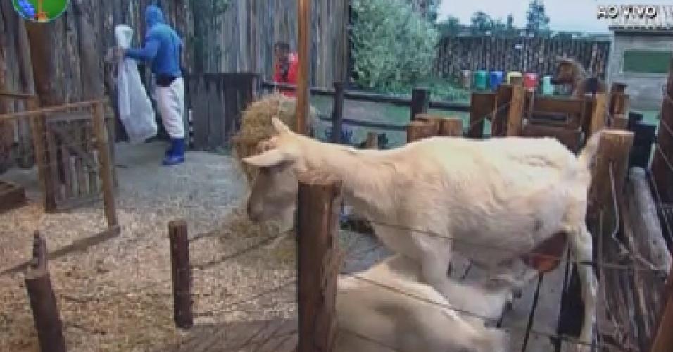 Gustavo Salyer ajuda Nicole Bahls com as cabras (8/6/12)