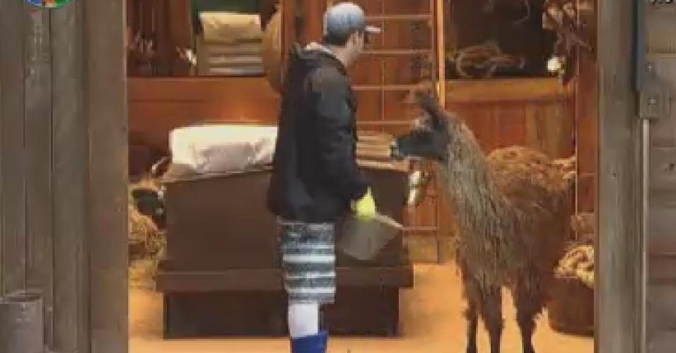 Vavá tenta despistar lhama Consuelo para conseguir dar comida para o animal (10/6/12)