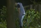 Sylvinho Blau-Blau leva punição após fazer xixi no mato e peões ficam 12h sem piscina - Reprodução/Record