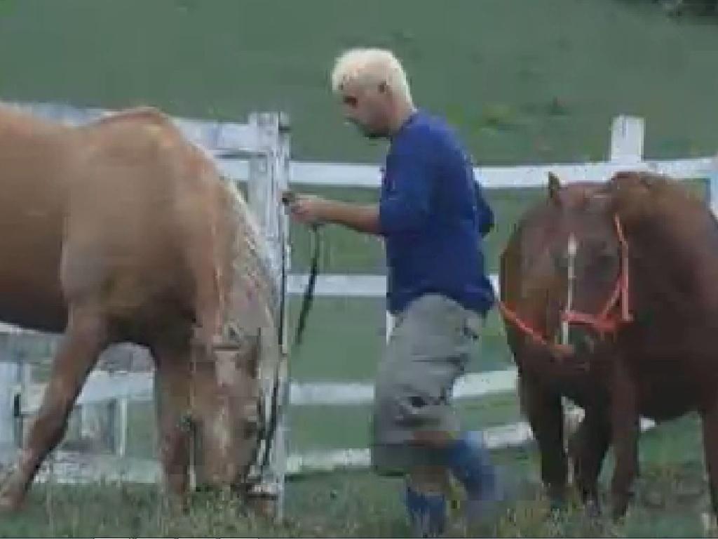 Rodrigo Capella cuida dos cavalos (22/6/12)