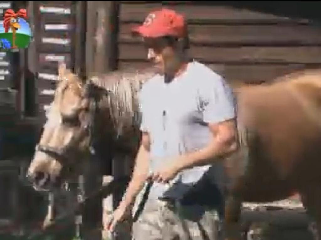 Felipe Folgosi cuida dos cavalos (27/6/12)