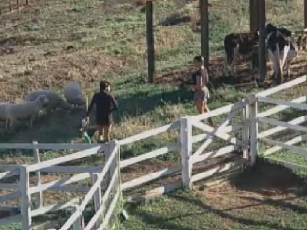 Penélope Nova e Nicole Bahls cuidam das vacas (30/6/12)