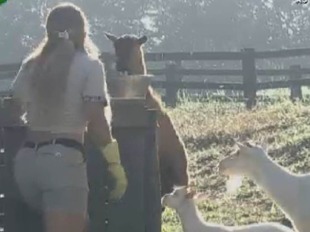 Viviane Araújo respira aliviada depois de colocar as cabras para fora do chiqueiro (2/7/12)