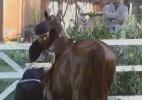 Égua prenha deixa peões alarmados - Reprodução/ Record