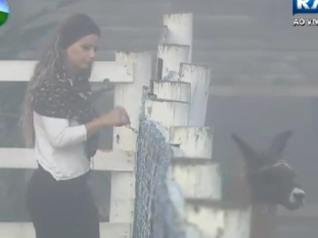 Com medo de animais, Viviane Araújo é acuada por lhama Consuelo na manhã desta sexta-feira (13)