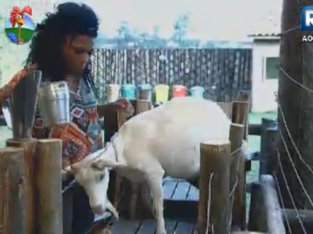 Simoen Sampaio tem dificuldade para tirar leite de cabra na manhã desta terça-feira (17)