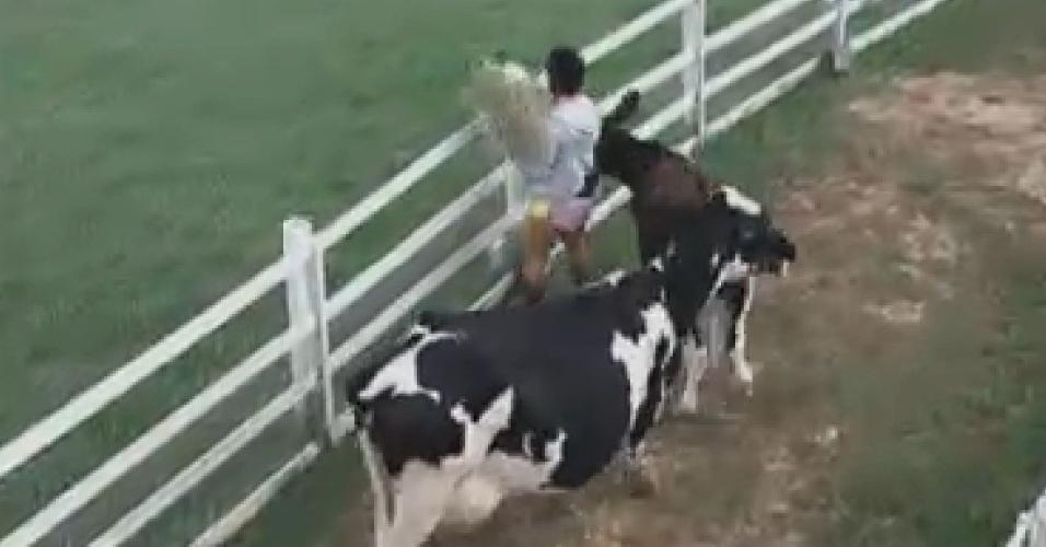 Bezerro Bernardo dá cabeçadas em Penélope Nova enquanto ela carrega ração para animais (25/7/12)