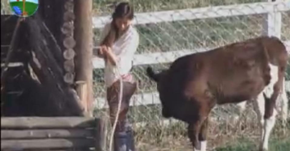 O bezerro Bernardo brinca com Nicole Bahls enquanto a modelo cuida dos bichos