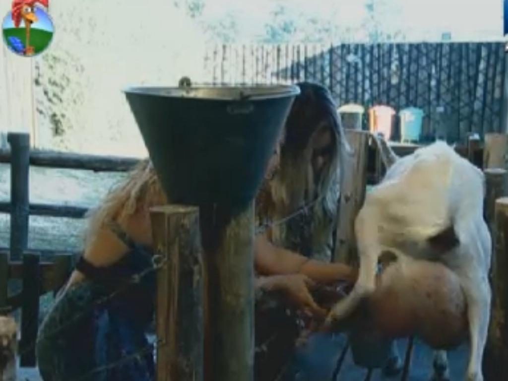 Viviane Araújo tem dificuldades para ordenhar cabra e recebe ajuda da fazendeira Robertha Portella (7/8/12)