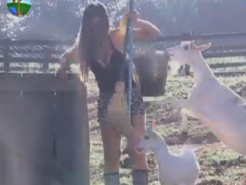 Cabras pulam em Nicole Bahls durante a tarefa com os porcos (8/8/12)
