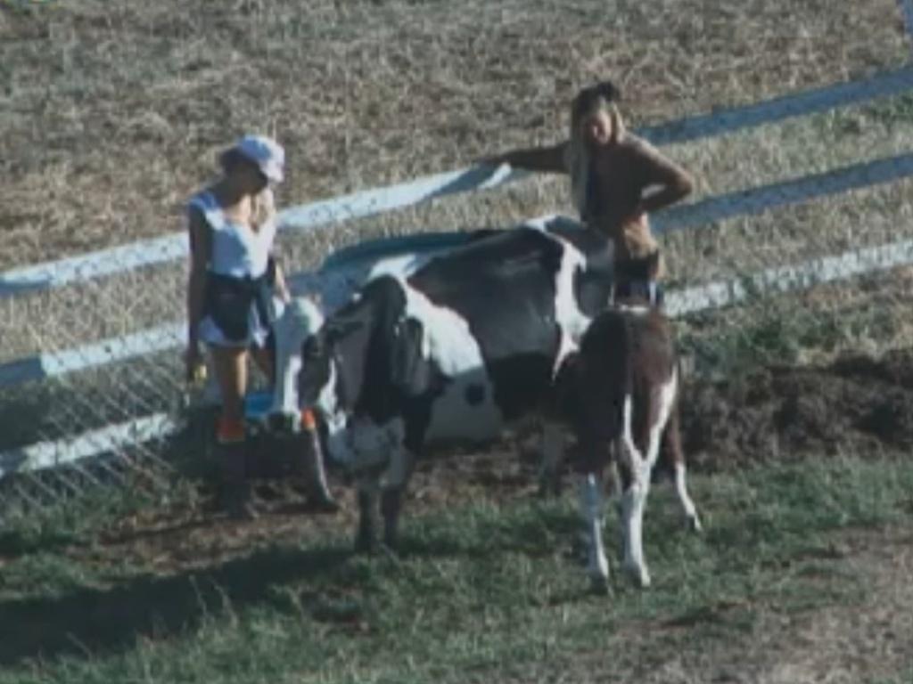 léo Áquilla e Robertha Portella observam o bezerro Bernardo mamar (8/812)
