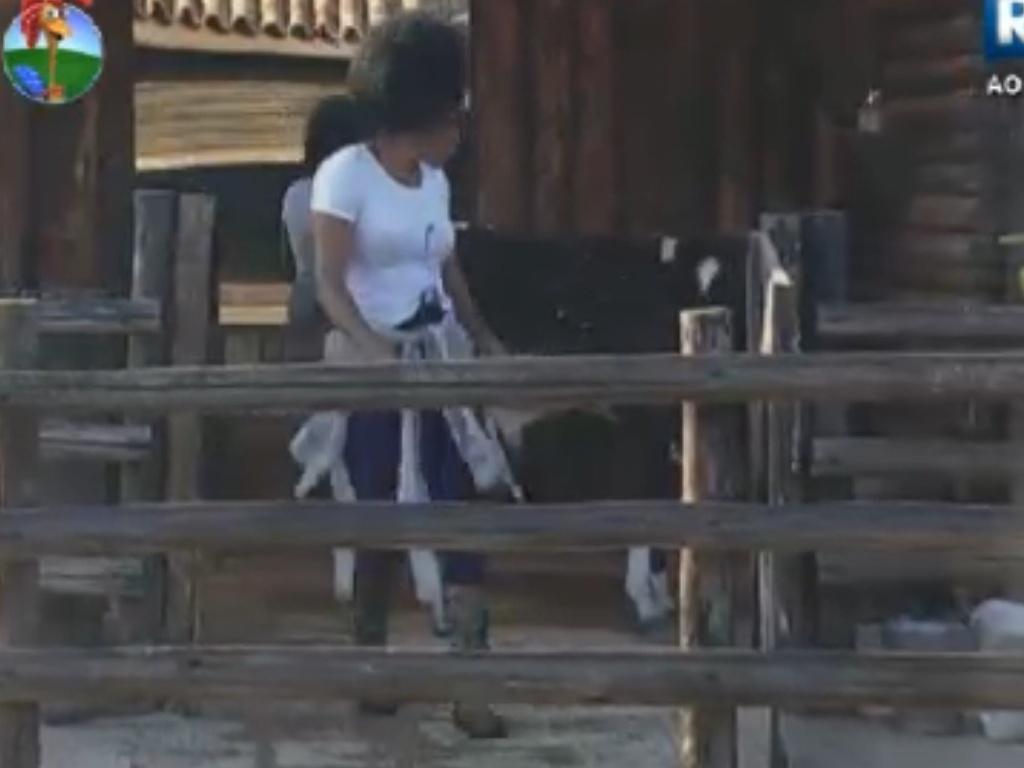 Simone Sampaio tem dificuldades para tocar bezerro de volta ao pasto após ordenha da vaca (9/8/12)