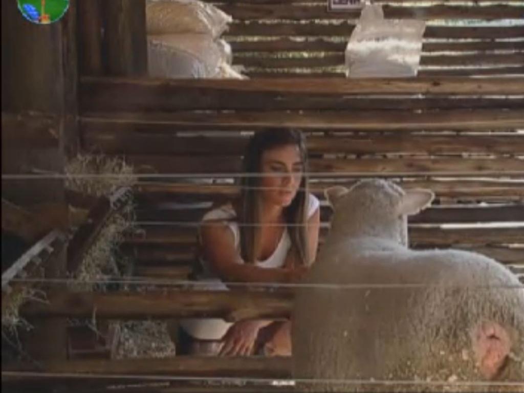Nicole Bahls faz carinho em ovelha na manhã deste sábado (11/8/12)