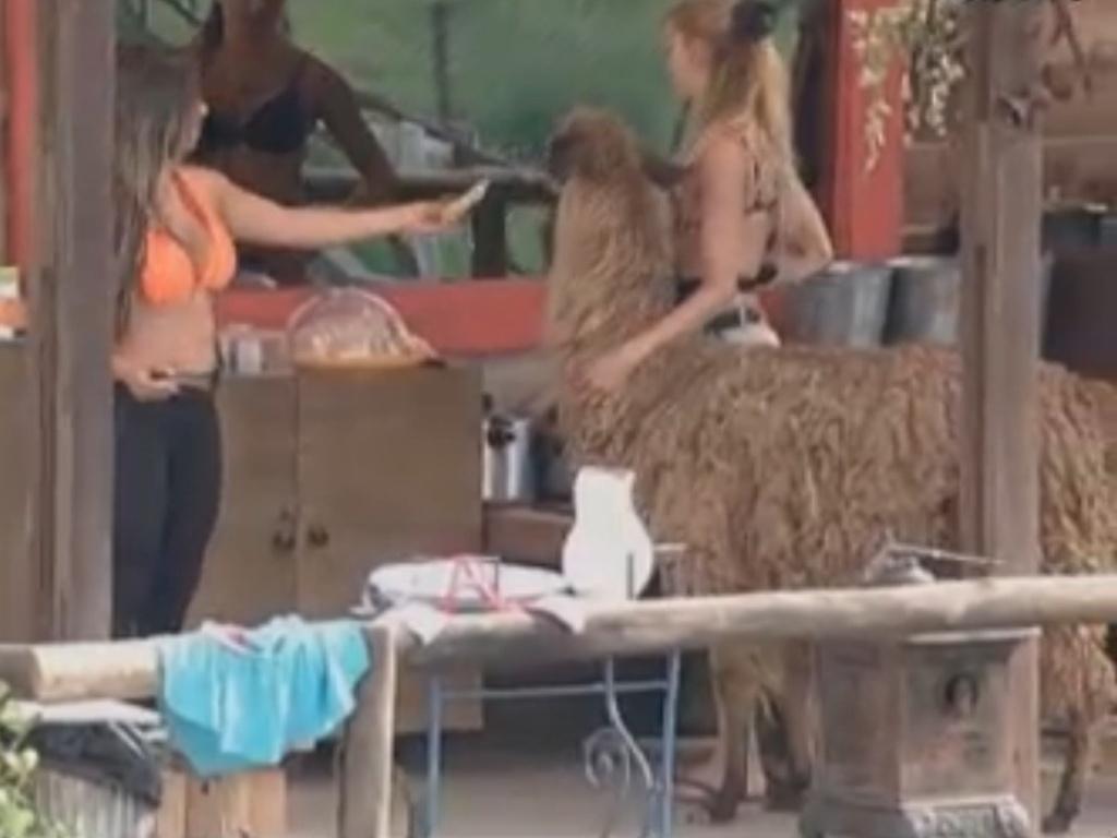 Lhama Consuelo invade cozinha do celeiro e dá trabalho para peoas (13/8/12)