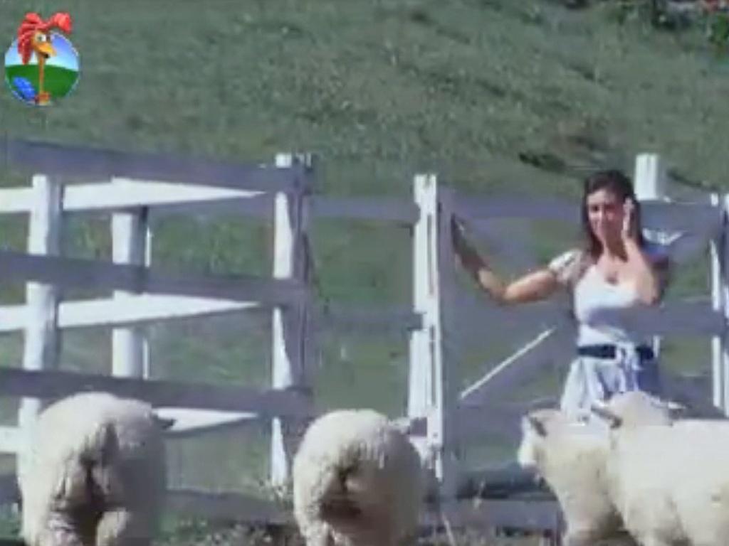 Nicole Bahls desabafa enquanto cuida das ovelhas na manhã desta quarta (15/8/12)