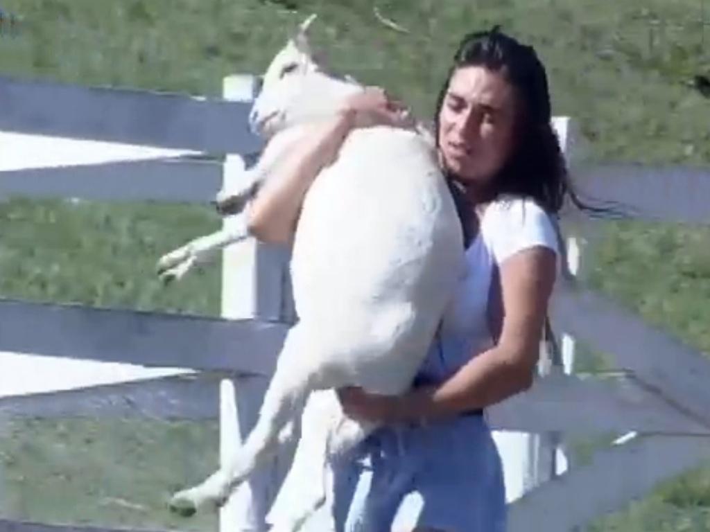 Nicole Bahls passa sufoco com cabras ao cuidar das ovelhas (15/8/12)