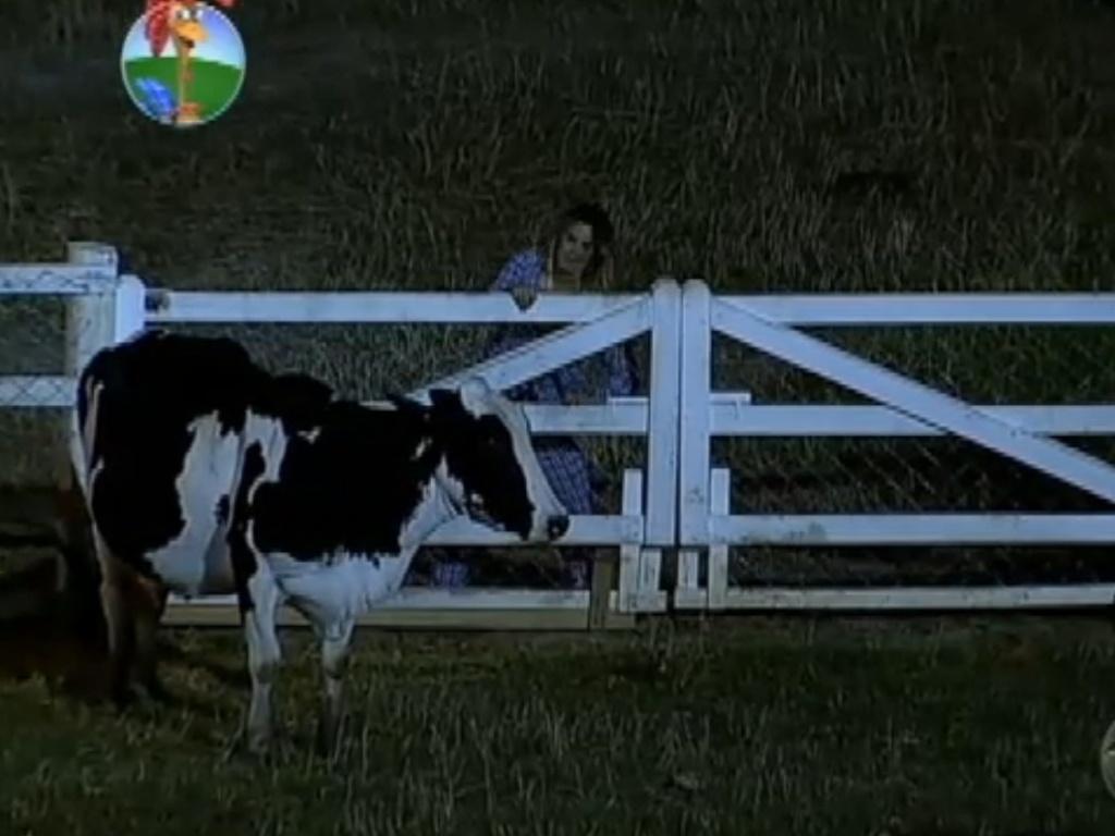 Robertha Portella tenta entrar no pasto da vaca Mimosa para fugir dos zumbis (13/8/12)