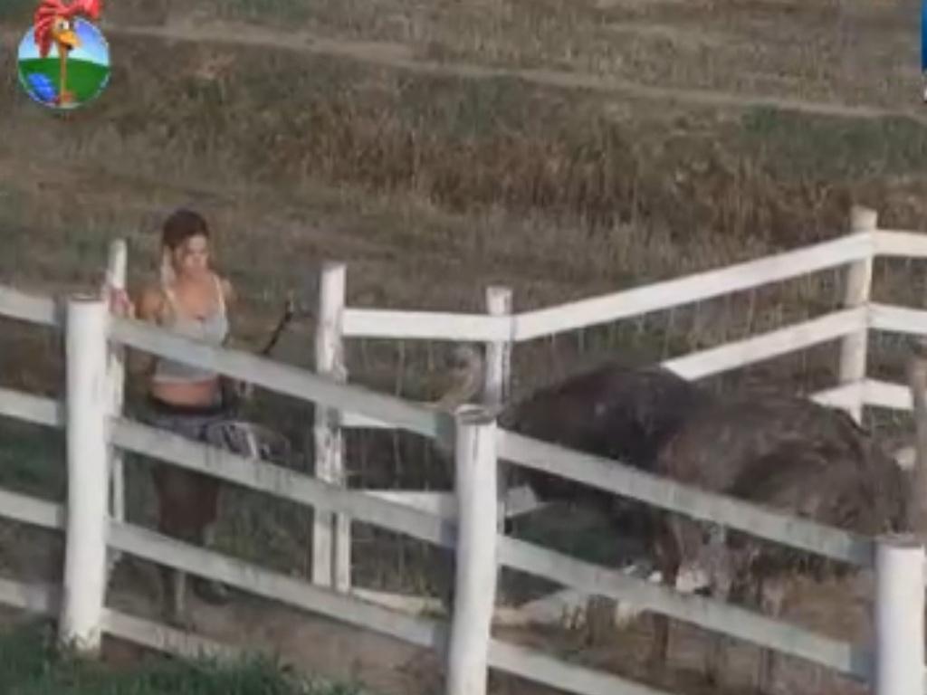 Mesmo na reta final do reality, Robertha ainda tem dificuldades no trato com alguns animais, como os avestruzes (16/8/12)