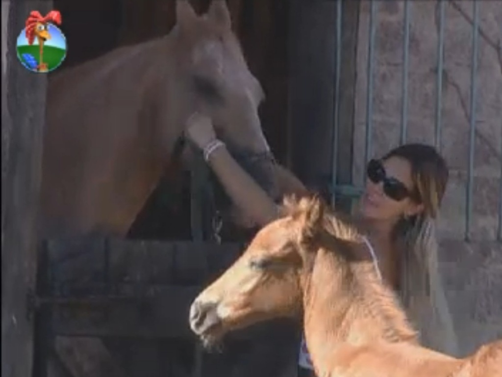 Robertha Portella cuida do potro Bruce e do cavalo Jano (20/8/12)