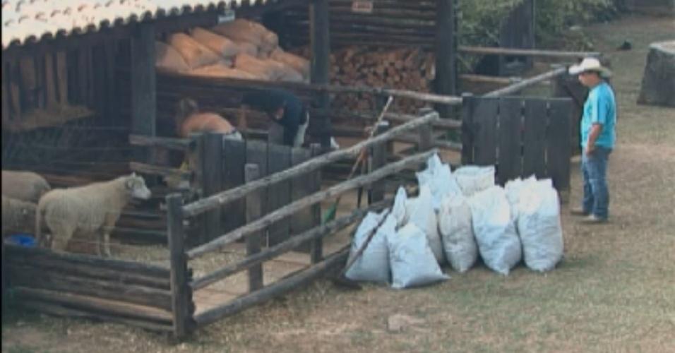 Peões do celeiro limpam área das ovelhas sob supervisão na tarde deste sábado (25/8/12)