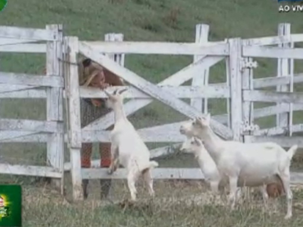 Léo Áquilla se despede das cabras (28/8/12)