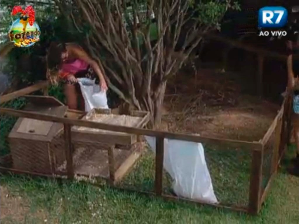 Angelis trata dos coelhos