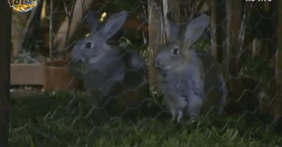 """Alguns dos coelhinhos da """"Fazenda de Verão"""""""