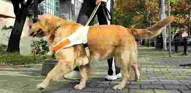 Reprodução/Dog Vacay
